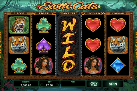 eotic cats microgaming spielautomaten