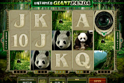 untamed giant panda microgaming spielautomaten